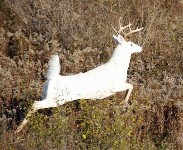the home depot in store s with Rare New York White Deer Herd May Jeopardy on Pizza Shoes likewise Fashionwall Metroliner Tempered Hardboard Tileboard g1363103 moreover N 5yc1vZc8s2 as well 1087125 in addition Office Depot Brand Plastic Ruler 6.