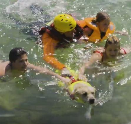 canine-lifeguard