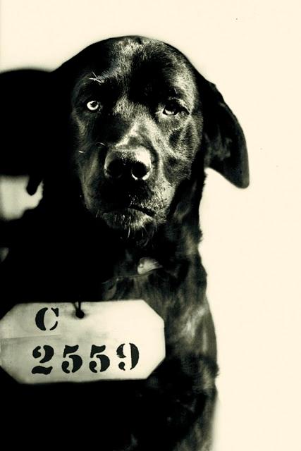 pep-the-prison-dog