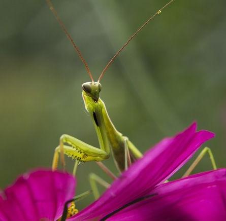 beneficial-bug