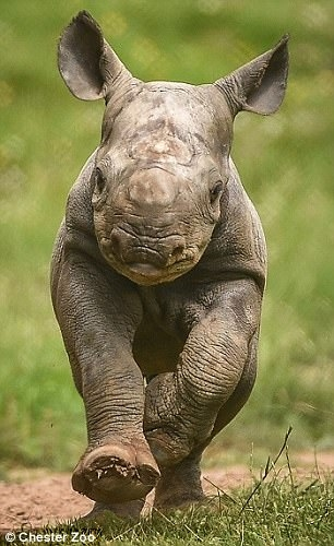 ike-baby-rhino