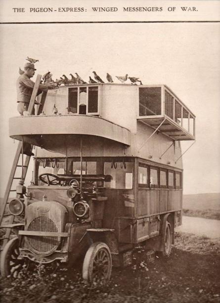pigeon-double-decker-bus