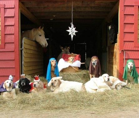 canine-christmas-2017